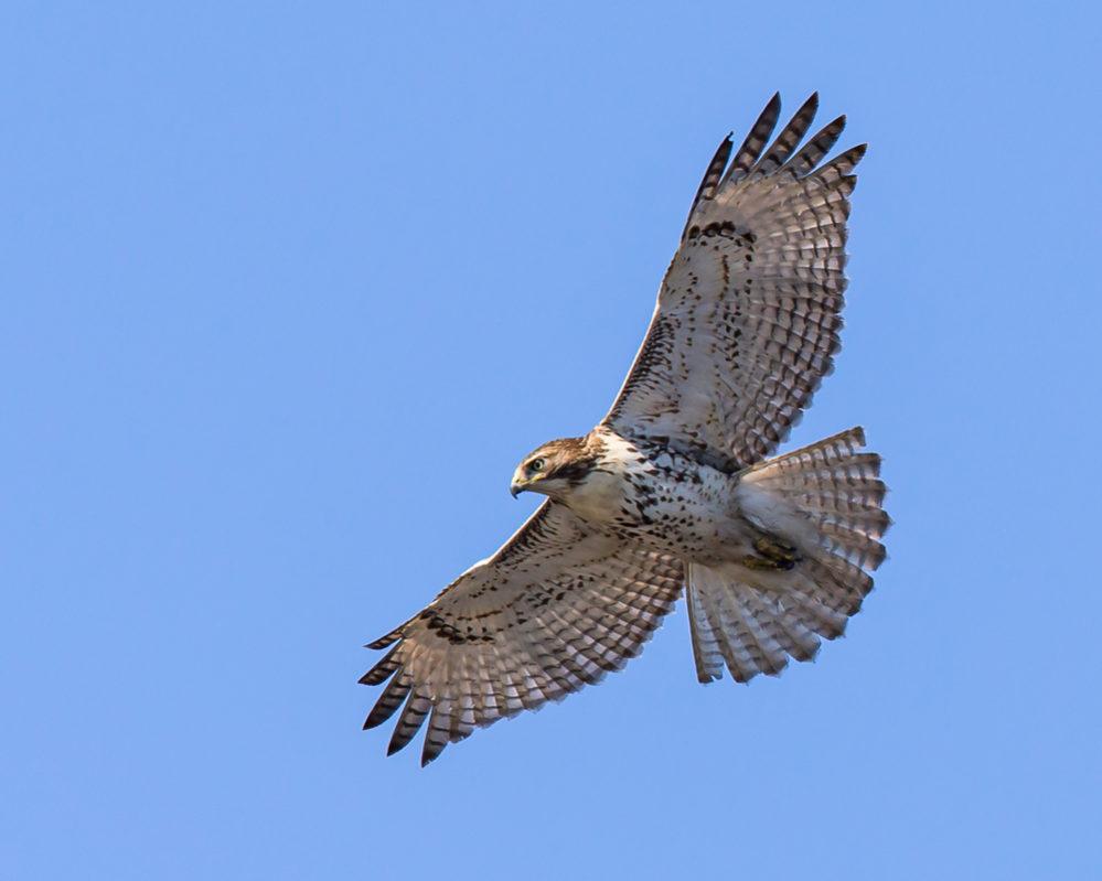 「鷹」の画像検索結果