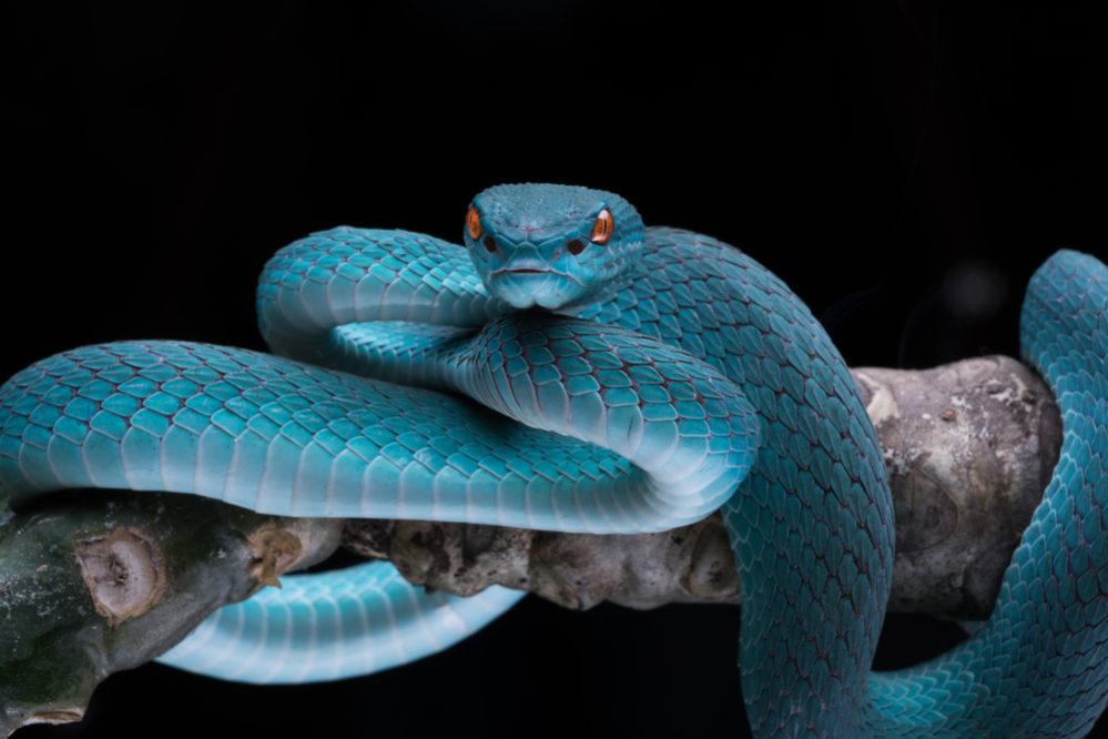 ことわざ「蛇の道は蛇」の意味と使い方:例文付き | スッキリ